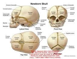 skull-anatomy